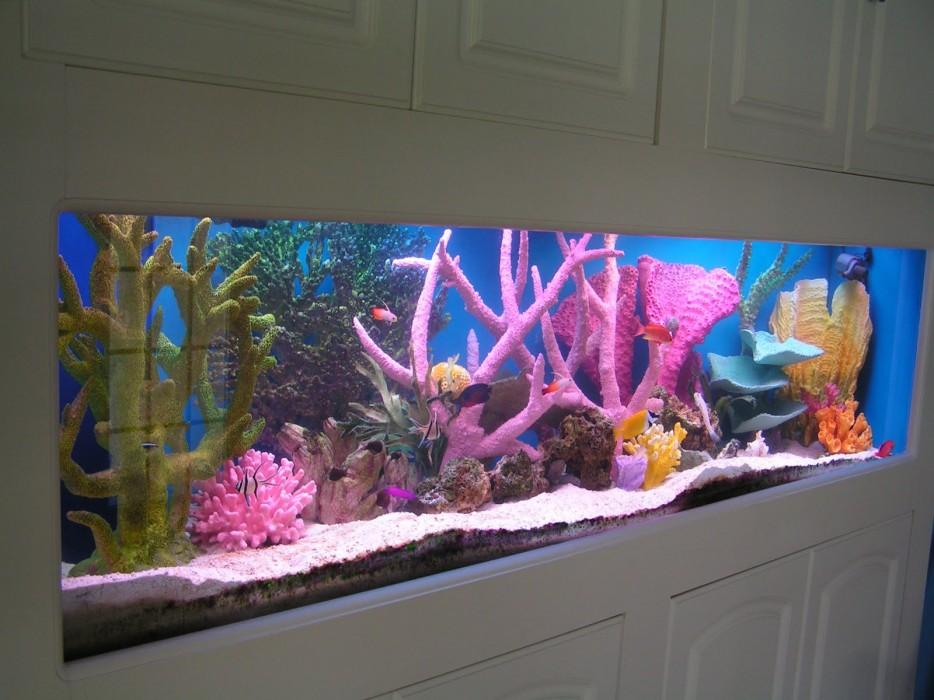 30-aquários-incríveis-que-ocê-gostaria de-ter-em-casa - Blog-Animal (17)