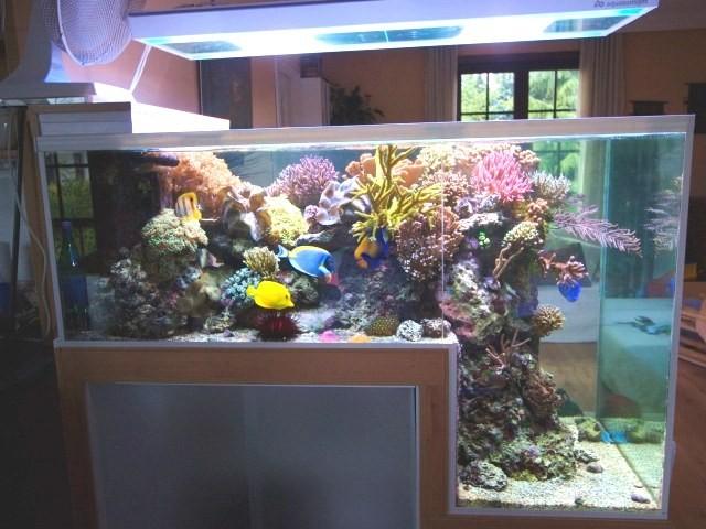 30-aquários-incríveis-que-ocê-gostaria de-ter-em-casa - Blog-Animal (19)