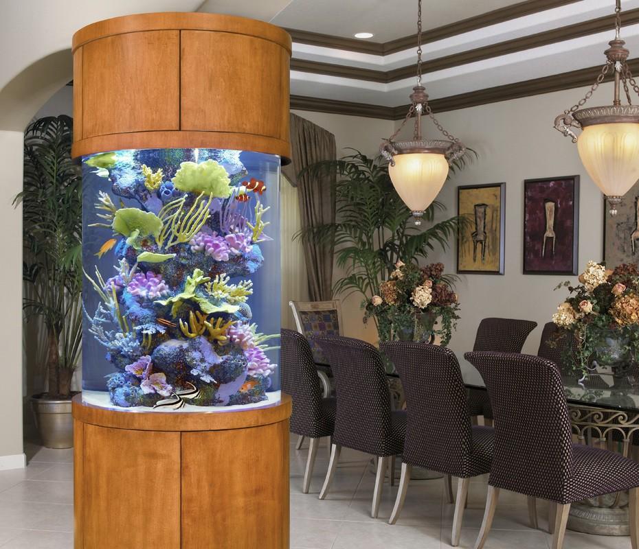 30-aquários-incríveis-que-ocê-gostaria de-ter-em-casa - Blog-Animal (21)