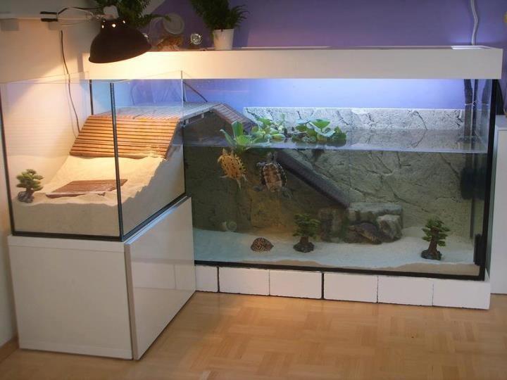 30-aquários-incríveis-que-ocê-gostaria de-ter-em-casa - Blog-Animal (26)