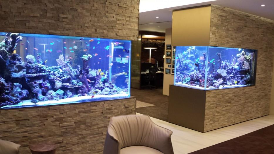 30-aquários-incríveis-que-ocê-gostaria de-ter-em-casa - Blog-Animal (27)