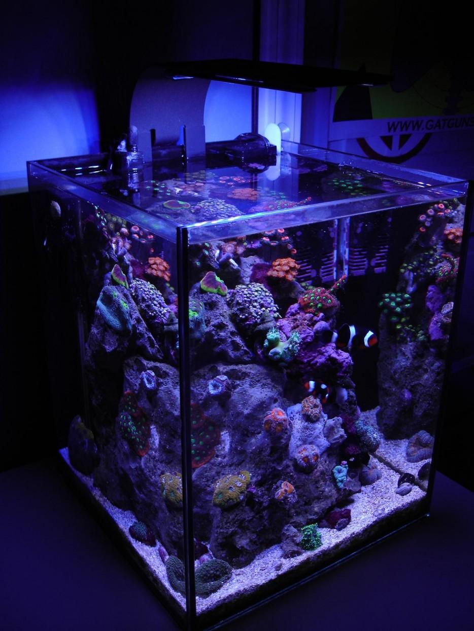 30-aquários-incríveis-que-ocê-gostaria de-ter-em-casa - Blog-Animal (28)