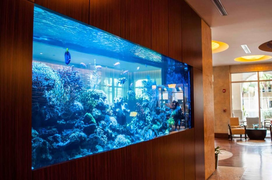 30-aquários-incríveis-que-ocê-gostaria de-ter-em-casa - Blog-Animal (5)