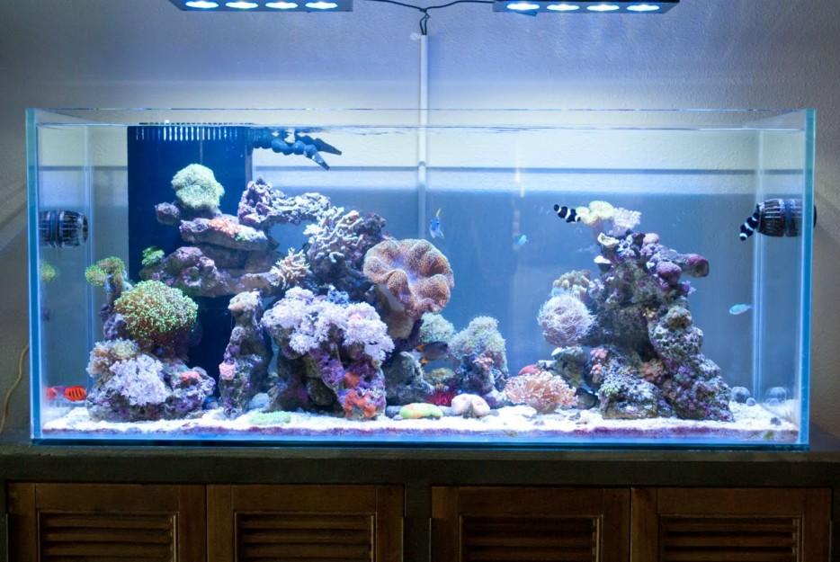 30-aquários-incríveis-que-ocê-gostaria de-ter-em-casa - Blog-Animal (7)