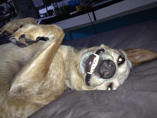 Aquele-momento-em-que-seu-cachorro-quer-que-você-acorde-logo-Blog-Animal (1)