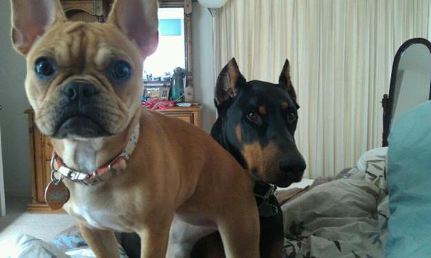 Aquele-momento-em-que-seu-cachorro-quer-que-você-acorde-logo-Blog-Animal (11)