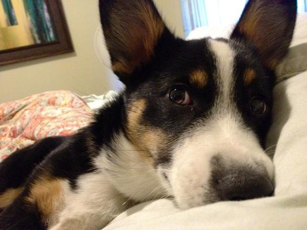 Aquele-momento-em-que-seu-cachorro-quer-que-você-acorde-logo-Blog-Animal (13)