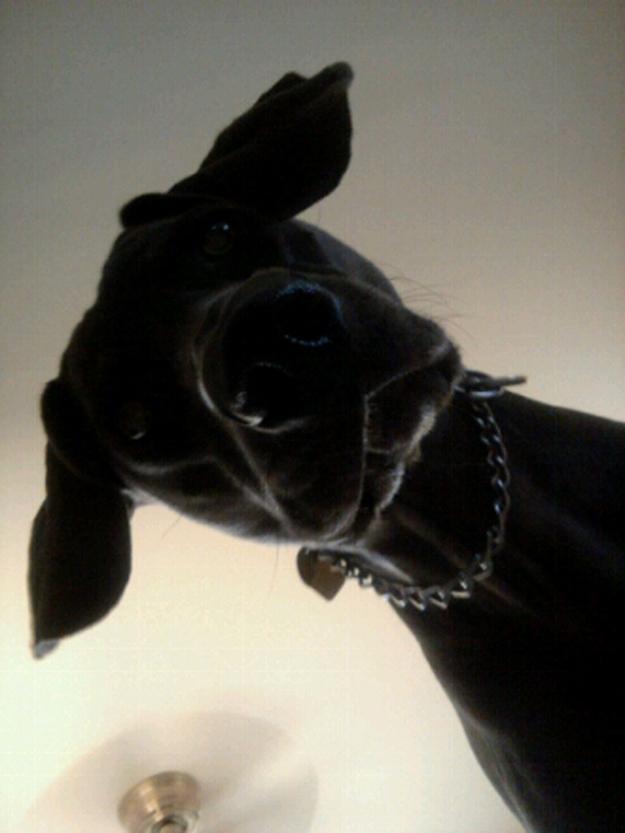 Aquele-momento-em-que-seu-cachorro-quer-que-você-acorde-logo-Blog-Animal (14)