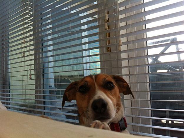 Aquele-momento-em-que-seu-cachorro-quer-que-você-acorde-logo-Blog-Animal (15)