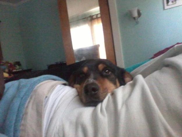 Aquele-momento-em-que-seu-cachorro-quer-que-você-acorde-logo-Blog-Animal (16)