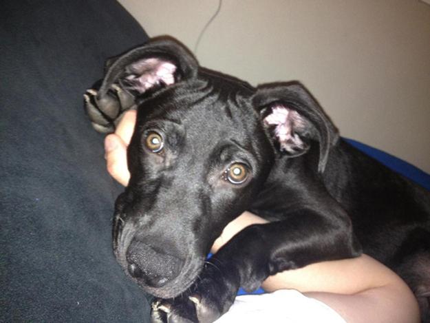 Aquele-momento-em-que-seu-cachorro-quer-que-você-acorde-logo-Blog-Animal (17)