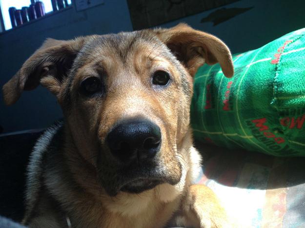 Aquele-momento-em-que-seu-cachorro-quer-que-você-acorde-logo-Blog-Animal (18)