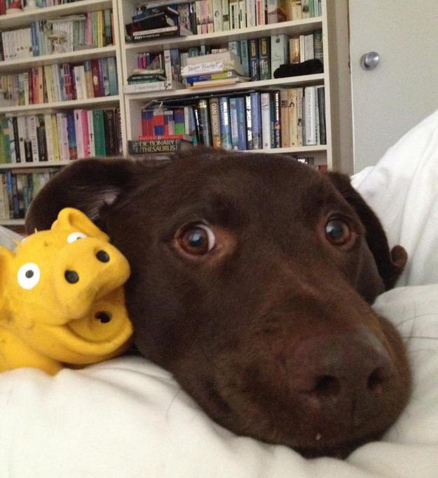 Aquele-momento-em-que-seu-cachorro-quer-que-você-acorde-logo-Blog-Animal (20)
