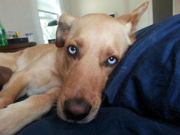 Aquele-momento-em-que-seu-cachorro-quer-que-você-acorde-logo-Blog-Animal (4)