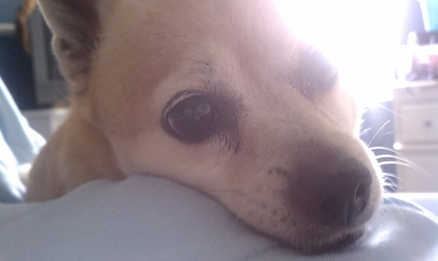 Aquele-momento-em-que-seu-cachorro-quer-que-você-acorde-logo-Blog-Animal (5)