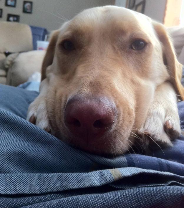 Aquele-momento-em-que-seu-cachorro-quer-que-você-acorde-logo-Blog-Animal (6)