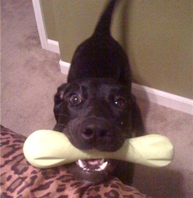 Aquele-momento-em-que-seu-cachorro-quer-que-você-acorde-logo-Blog-Animal (7)