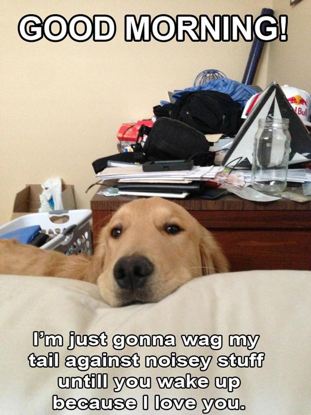 Aquele-momento-em-que-seu-cachorro-quer-que-você-acorde-logo-Blog-Animal (8)