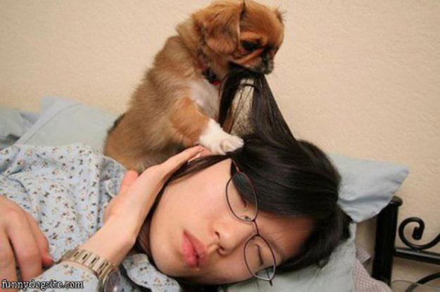 Aquele-momento-em-que-seu-cachorro-quer-que-você-acorde-logo-Blog-Animal (9)