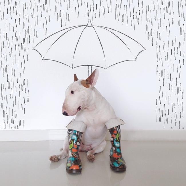 Artista-cria-divertidas-ilustrações-com-seu-cão-interagindo-nelas-Blog-Animal (10)