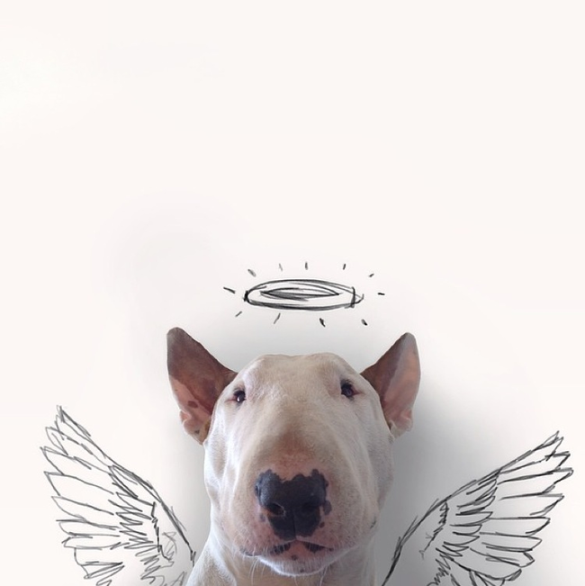 Artista-cria-divertidas-ilustrações-com-seu-cão-interagindo-nelas-Blog-Animal (11)