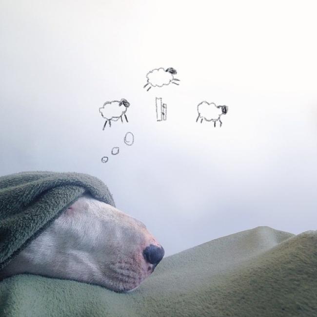 Artista-cria-divertidas-ilustrações-com-seu-cão-interagindo-nelas-Blog-Animal (2)