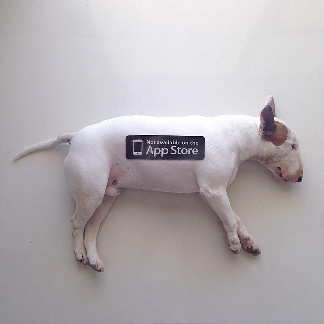 Artista-cria-divertidas-ilustrações-com-seu-cão-interagindo-nelas-Blog-Animal (3)
