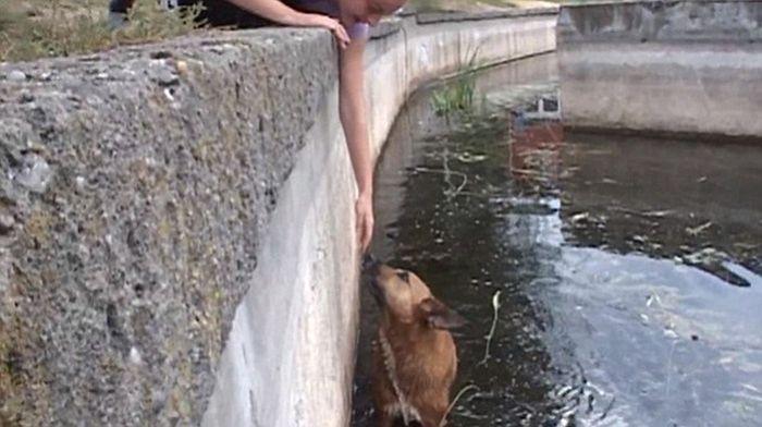 Cachorro de rua é resgatado de um lago (2)