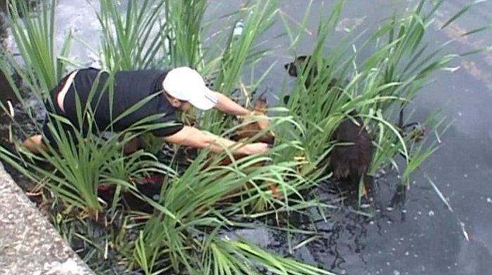 Cachorro de rua é resgatado de um lago (4)