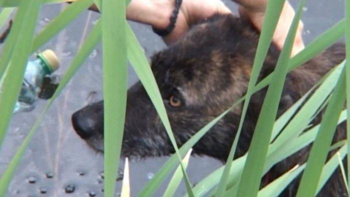 Cachorro de rua é resgatado de um lago (6)