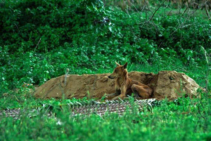 Cachorro se recusa a deixar a sepultura do seu dono - Blog Animal (1)
