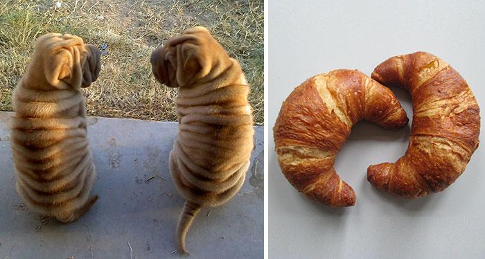Fotos de cachorros que se parecem com outras coisas (13)
