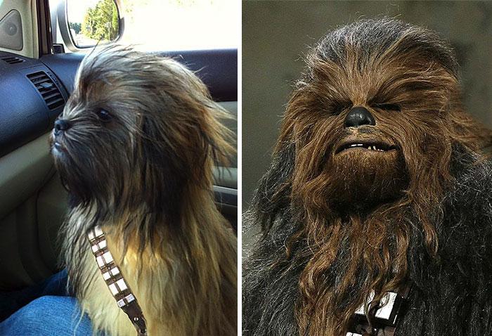 Fotos de cachorros que se parecem com outras coisas