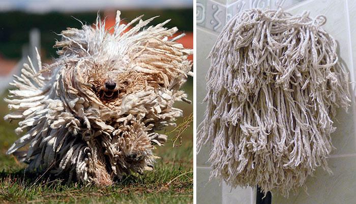 Fotos-de-cachorros-que-se-parecem-com-outras-coisas (7)