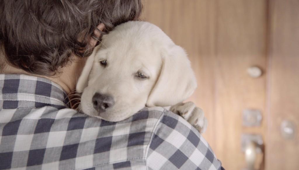 Campanha da Budweiser mostra a amizade entre homem e cachorro para incentivar a responsabilidade no volante - Blog Animal