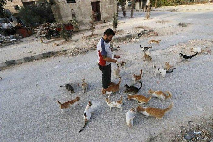 Cidade síria tem centenas de gatos de rua (1)