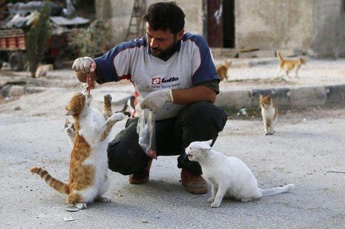 Cidade síria tem centenas de gatos de rua (2)