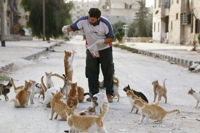 Cidade síria tem centenas de gatos de rua (3)