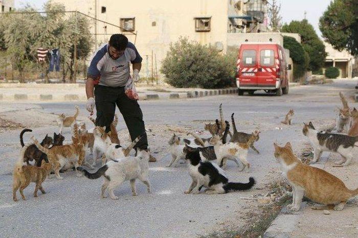 Cidade síria tem centenas de gatos de rua (4)