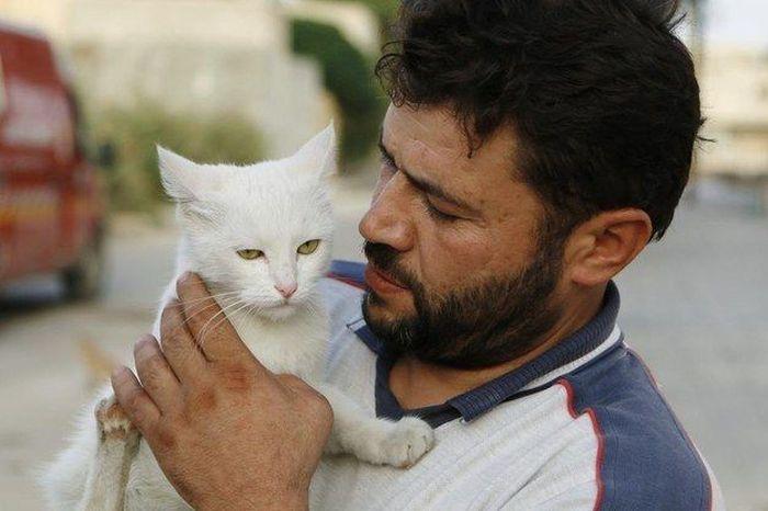 Cidade síria tem centenas de gatos de rua (5)