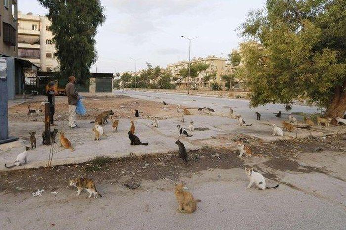 Cidade síria tem centenas de gatos de rua (8)