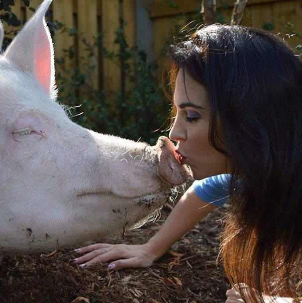Como-é-ter-um-porco-como-animal-de-estimação-Blog-Animal (21)