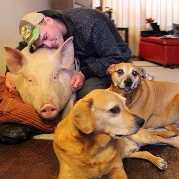 Como-é-ter-um-porco-como-animal-de-estimação-Blog-Animal (25)