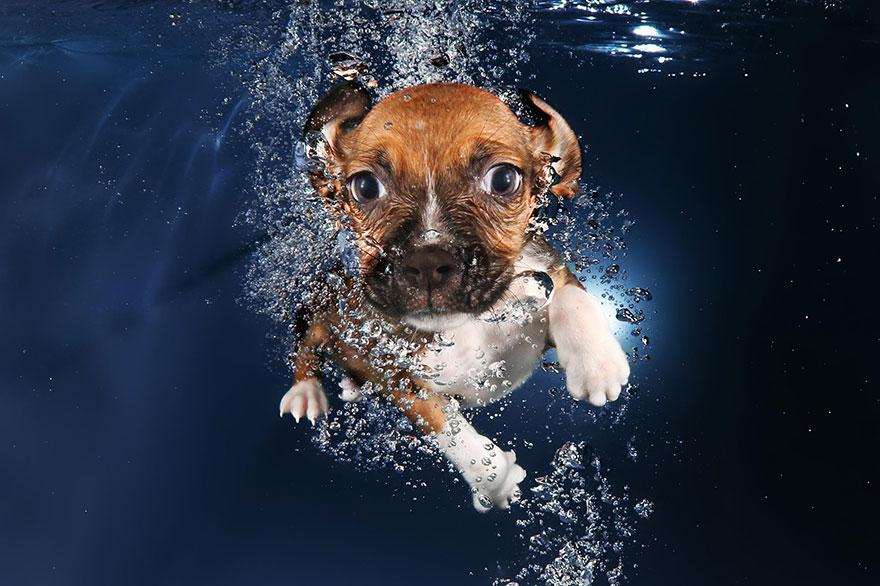 Foto de filhotes de cachorro debaixo d'agua (10)