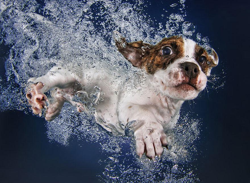 Foto de filhotes de cachorro debaixo d'agua (3)