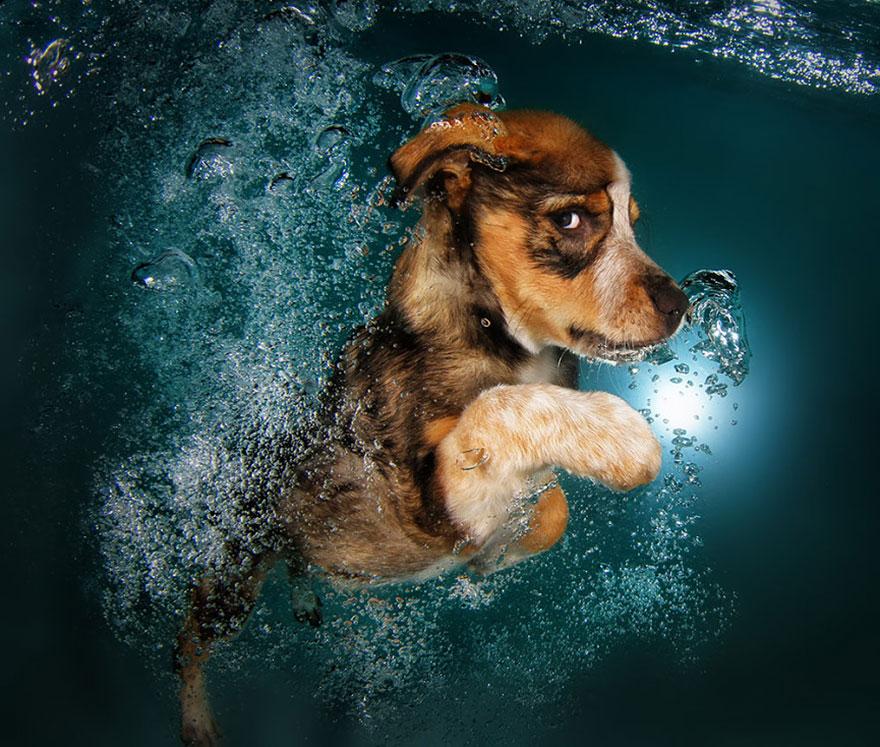 Foto de filhotes de cachorro debaixo d'agua (4)