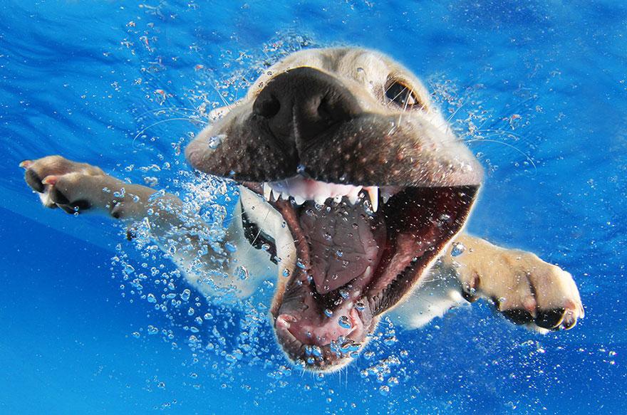 Foto de filhotes de cachorro debaixo d'agua (8)