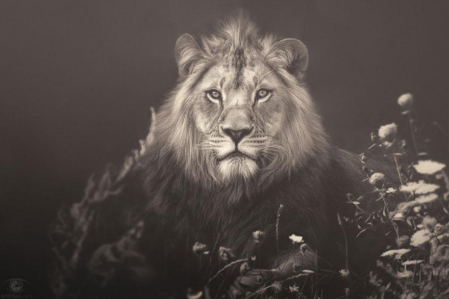 Fotografias sentimentais de animais por Manuela Kulpa (3)