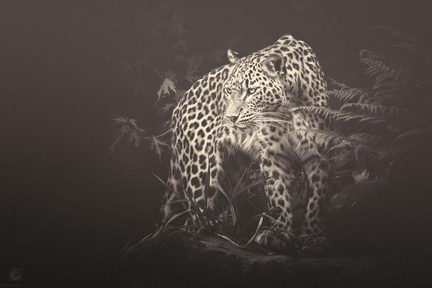 Fotografias sentimentais de animais por Manuela Kulpa (6)