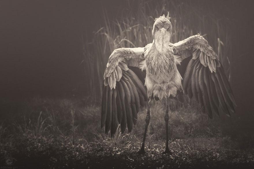 Fotografias sentimentais de animais por Manuela Kulpa (8)